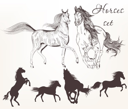 year of horse: Vector set of detailed hand drawn horses for design