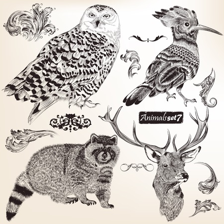 high detailed: Collection of vector high detailed animals for design  Illustration