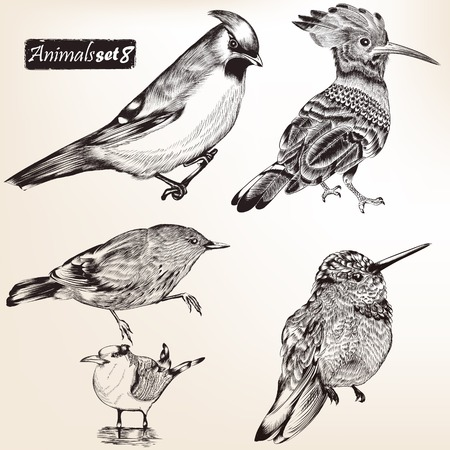high detailed: Collection of high detailed animals for design