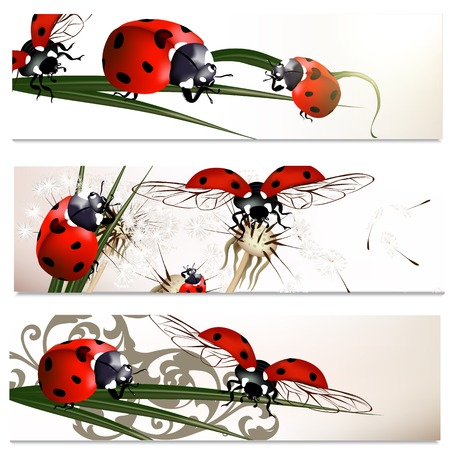 Set of floral brochures with  ladybirds for design Vector