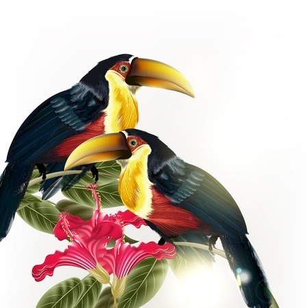 tropical bird: Illustration with, couple of toucan sit on branch isolated on white,