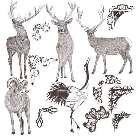 animal border: Collection  of high detailed animals for design Illustration