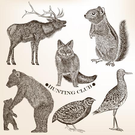 ardilla: Colección de animales detallados altos para el diseño Vectores