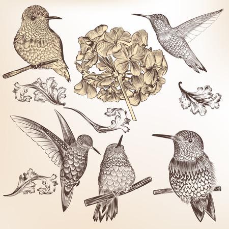 hummingbird: Vector set of detailed hand drawn birds for design