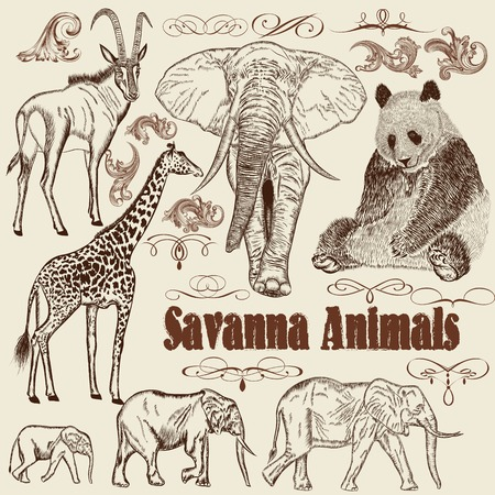 set of hand drawn detailed  African animals with calligraphic elements Vector