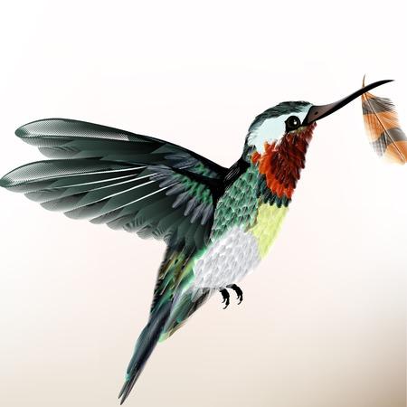 hummingbird: realistic humming bird for design Illustration
