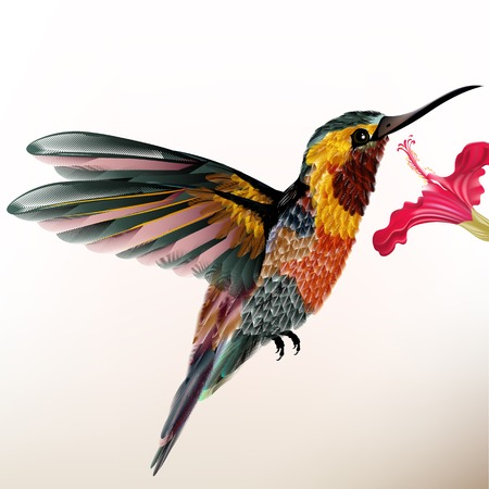 multicolor: illustration with realistic humming bird for design Illustration