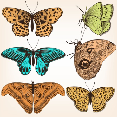 monochromic: Set of detailed  vector butterflies for design
