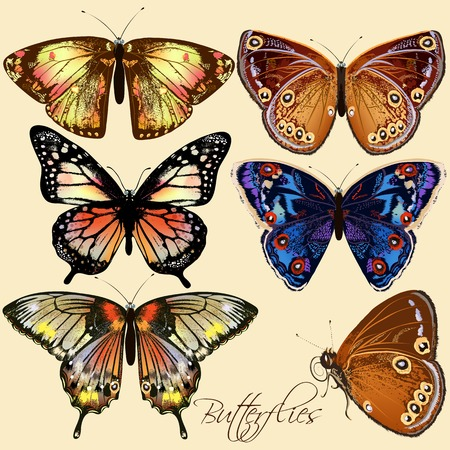 six objects: Vector set of detailed colorful butterflies for design