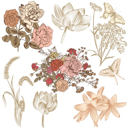 lily flowers set: Collection of high detailed vector flowers for design Illustration