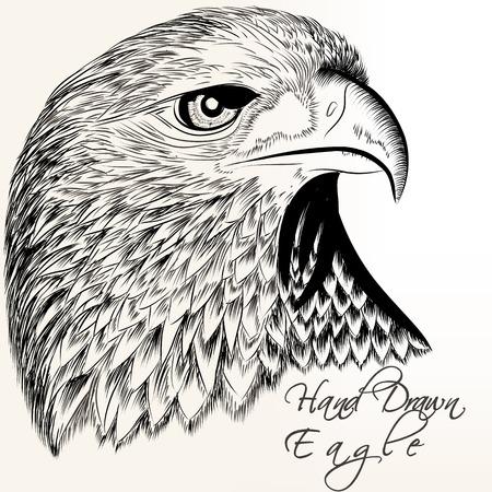 Vector hand drawn vector eagle close up plane