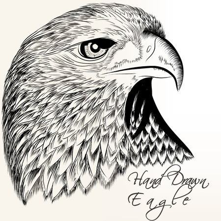 gravure: Vector hand drawn vector eagle close up plane