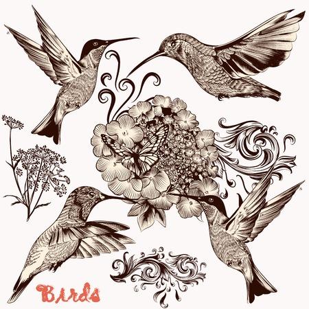 hummingbird: set of detailed hand drawn birds for design Illustration