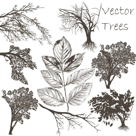 Set of vector hand drawn trees and leafs for design Vector