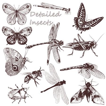 設計のための詳細なベクトル蝶のセット