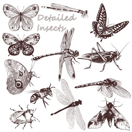 dragonfly wing: Set of detailed vector butterflies for design Illustration