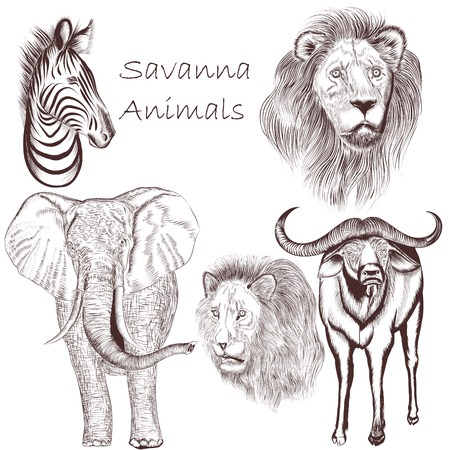 Vector set of hand drawn detailed African animals Vector