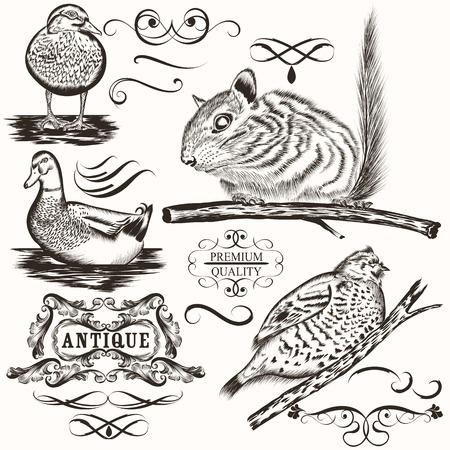 ardilla: Conjunto de vector detalladas animales para el diseño