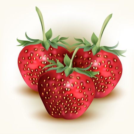 fresh strawberries isolated on white Vector