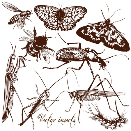 monochromic: Set of detailed insects for design Illustration