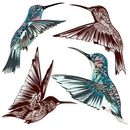 ensemble de détaillées oiseaux tiré par la main pour la conception Vecteurs