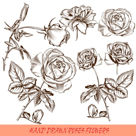 foliate: Collection of high detailed vector flowers for design Illustration