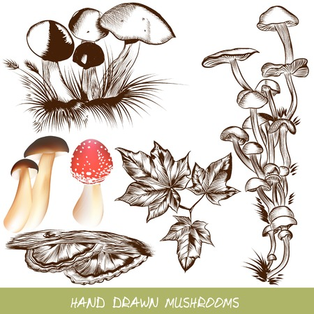 Vector forest mushrooms in engraved style Vector