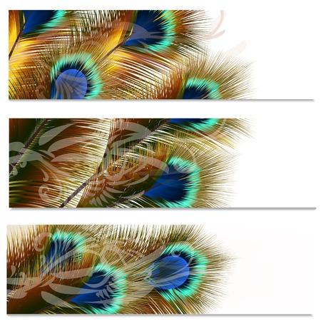 plumas de pavo real: Vector conjunto de tarjetas de visita con plumas de pavo real para el diseño