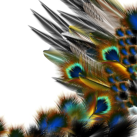 abstractly: Fashion pattern with colorful feathers