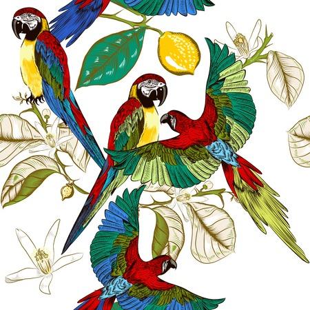 papagayo: Un par de loros grabadas sentarse en una ramas de lim�n