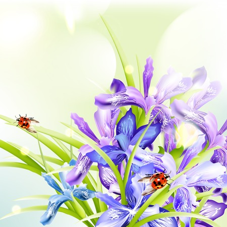 purple irises: Background with blue and purple irises for design