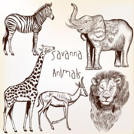siluetas de elefantes: Colección de vectores grabado animales de la sabana Vectores