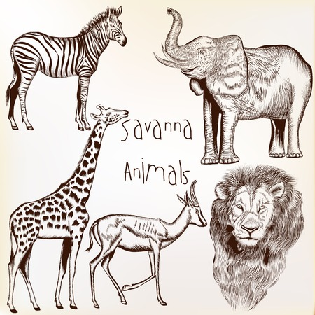 zebra pattern: Collection of vector engraved savanna animals