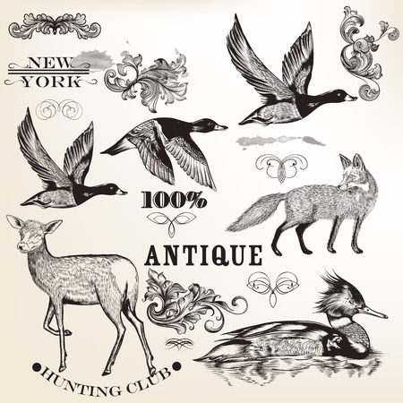 antique scroll: Set of vector detailed animals for design