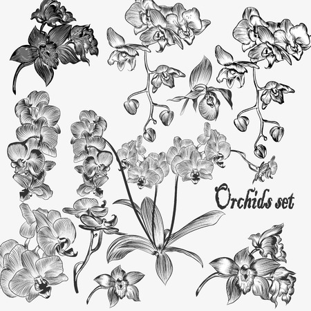 orchid branch: Set of vector detailed orchid flowers
