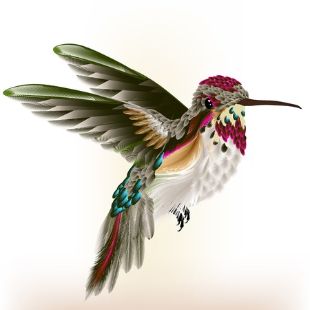 hummingbird: Vector illustration with realistic humming bird for design