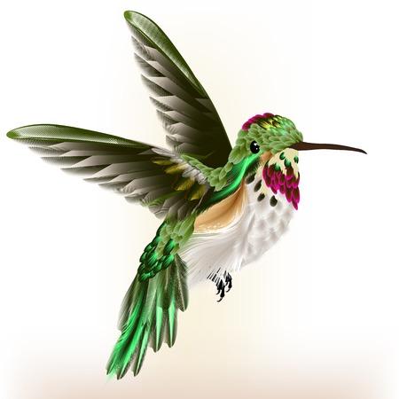 Vector illustratie met realistische zoemende vogel voor het ontwerp