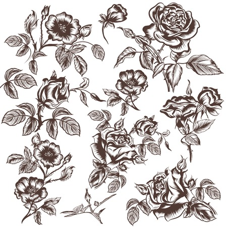 rose flowers: Collection of vector hand drawn rose flowers