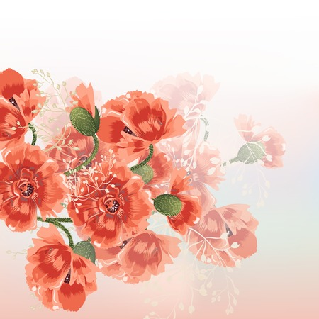 poppy flowers: Nature background with field poppy flowers Illustration