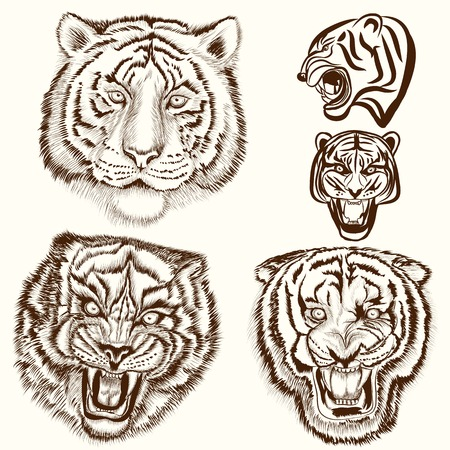 tiger hunting: Hand drawn tigers set in engraved style Illustration