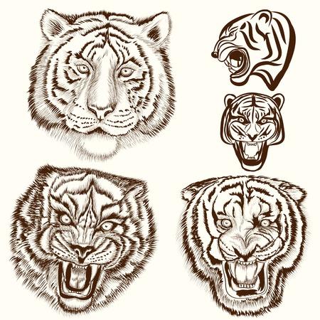 silueta tigre: Tigres drenados mano fijados en el estilo de grabado Vectores