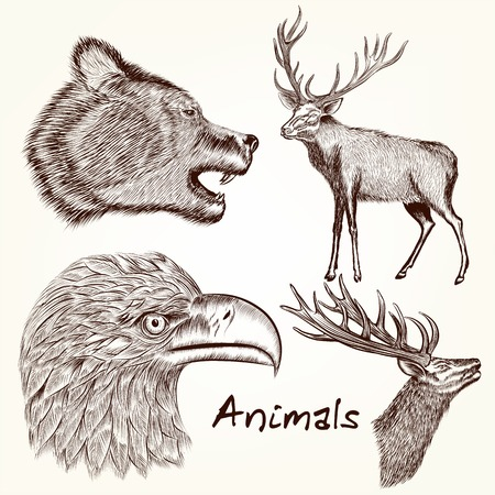 animals collection: Collection of vector hand drawn animals