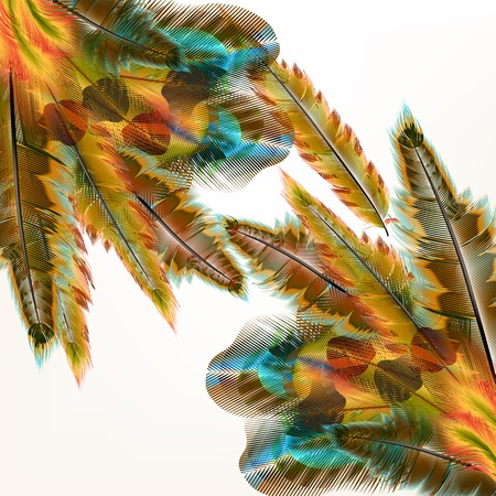 feather: Vector illustration with colored vector feathers for your design Illustration