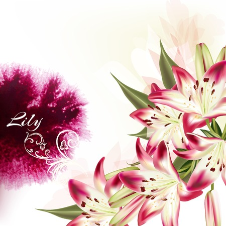 lily flower: Beautiful illustration or background with pink lily flowers and watercolor spot Illustration