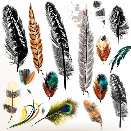 pluma: Gran conjunto de plumas de aves que se detallan en el estilo realista y grabado