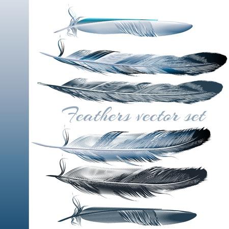 pluma: Colección de plumas azules realistas para el diseño