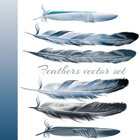 Collection of realistic blue feathers for design Vettoriali