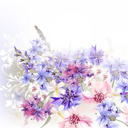 white tulip: Floral clear background  blue, pink and purple cornflowers
