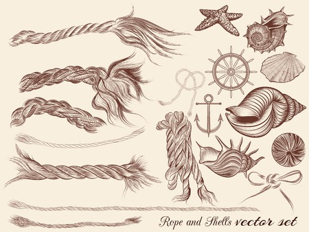 nautical rope: Collection of hand drawn sea elements rope and shells in vintage style