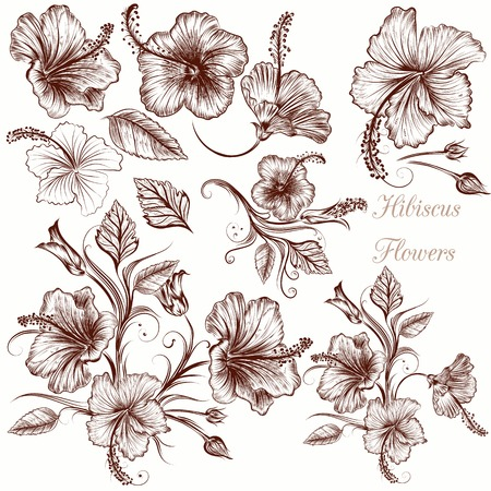 hibiscus flowers: Collection of vector hand drawn hibiscus flowers Illustration